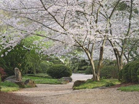 stone path: A path through a garden in the spring. Stock Photo