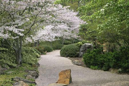 A path through a garden in the spring. 版權商用圖片