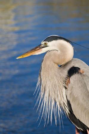 A heron by the water on the Alabama gulf coast. 版權商用圖片