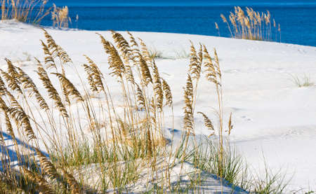 oats: The white sandy beach on the Alabama gulf coast. Stock Photo