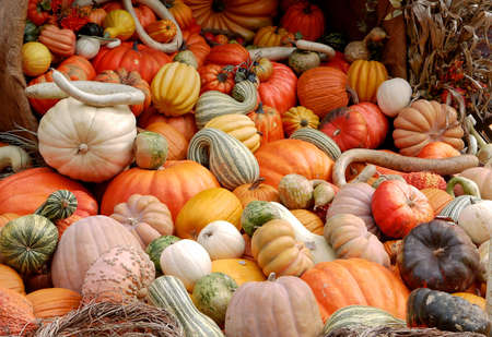 Various decorative and colorful vegetables