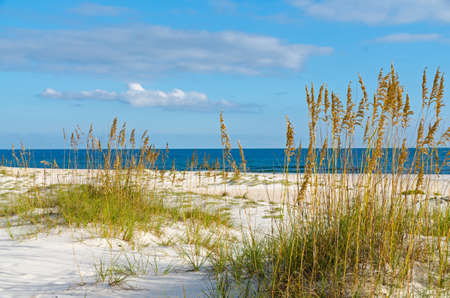 sea grass: A beach scene on the Alabama Gulf Coast.