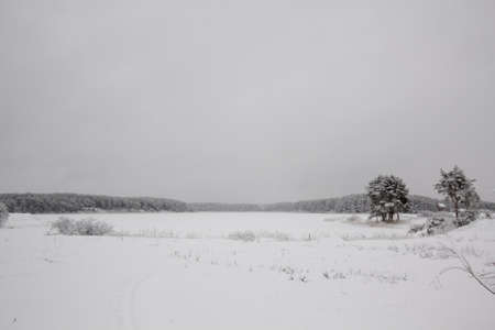 emptiness: Winter emptiness and forest