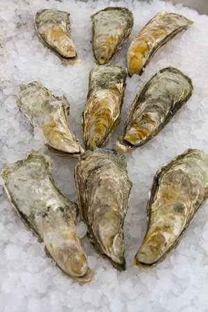 Oysters in ice photo
