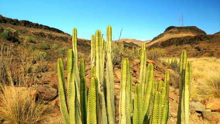 Viele gut aussehende Kaktuspflanzen stehen nebeneinander in verschiedenen grünen Farben Standard-Bild