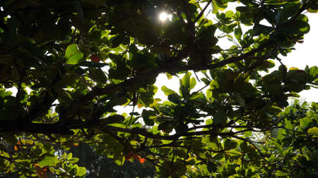 Green, thick leaves of the tree almost completely cover sunlight and sky