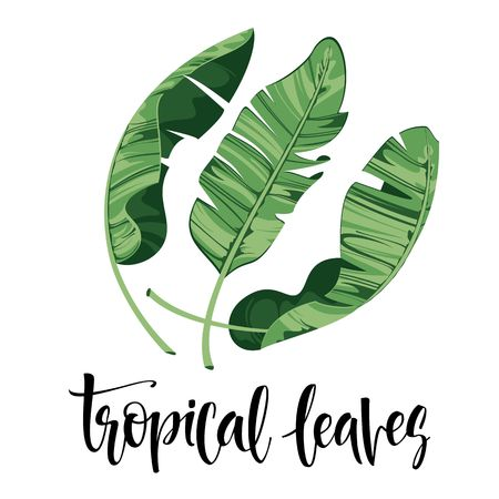 Vector tropical leaves, jungle leaves