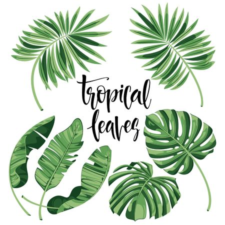 Tropical Leaves Collection on isolate vector. Beautiful Set. Vector illustration. Reklamní fotografie - 77380099