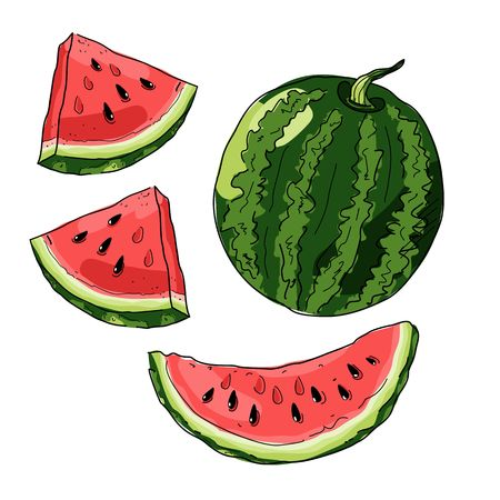 Whole striped watermelon sketch style vector illustration isolated on white background.