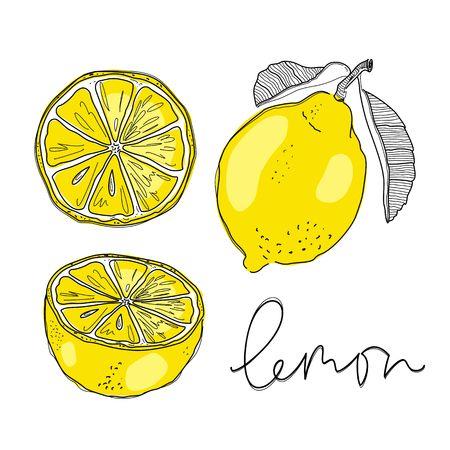 Hand draw of lemon. Vector illustration. Illustration