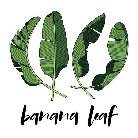 bananenblad ontwerpelement voor tropisch thema Stock Illustratie