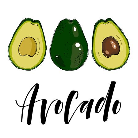 painting: Avocado hand drawn painting isolated on white background. Vector illustration of fruit avocado.