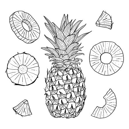Vector hand drawn pineapple and sliced pieces set. Tropical engraved style illustration. Ilustração