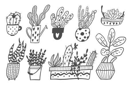 Set of house plants in pots isolated on white background. Vector Illustration. Stockfoto - 125997359