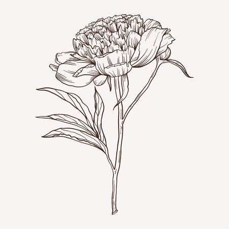 Vector peony flower. Hand drawn contour lines and strokes. Stock Illustratie
