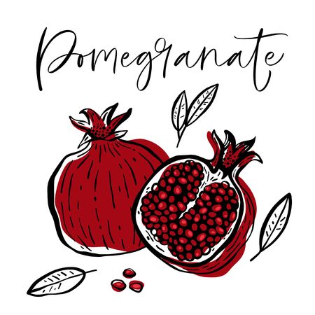 Hand drawn pomegranate fruit and plant. Vector illustration.