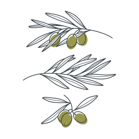 Set of olive branches in a modern linear style isolated on white background.