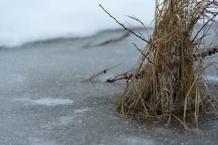 photo edges: Dry yellow grass frozen in lake. Close up.