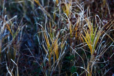 Spring grass closeup