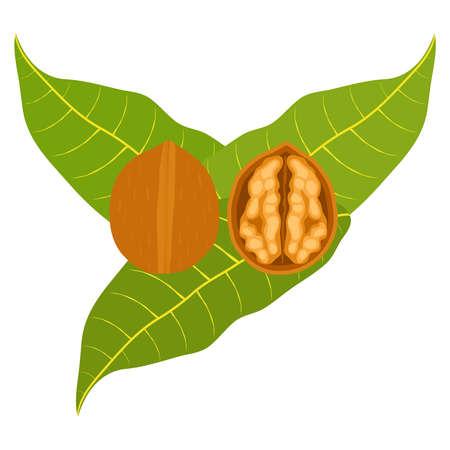 Icon walnuts. Flat design, vector illustration, vector.