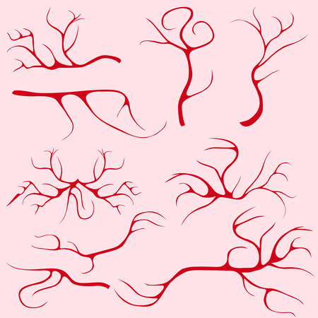 capillaries: Blood vessels and capillaries. Flat design, vector illustration, vector. Illustration