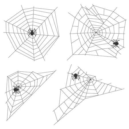 netting: Spider web with a spider. Flat design, vector illustration, vector.