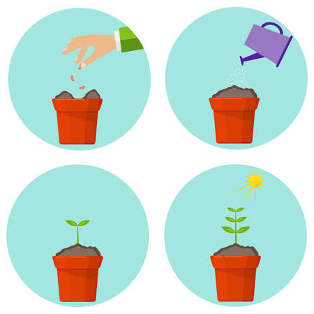 Phases of vegetation of a plant. Flat design, vector illustration, vector. Illustration