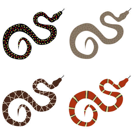 midwest: Snake, a set of poisonous snakes. Flat design, vector illustration, vector.