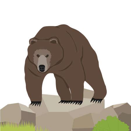 Bear, a realistic bear on the stone.