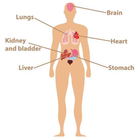 Human anatomy icon on white background, vector illustration.