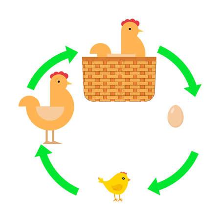 Egg, chick, chicken. The hen took the egg. Flat design, vector illustration, vector.