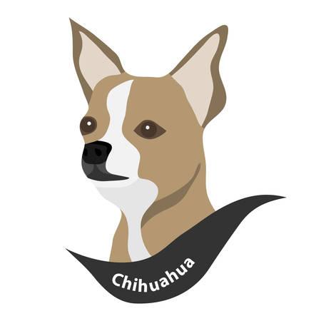 Head of a Chihuahua dog. Flat design, vector illustration
