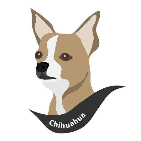 Head of a Chihuahua dog. Flat design, vector illustration