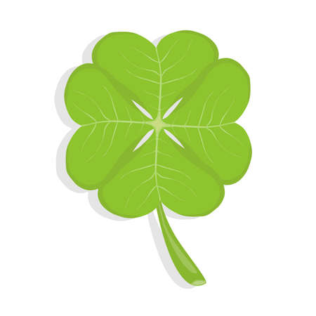 Clover, four-leafed clover, a symbol of luck. Realistic, green clover. Flat design, vector illustration, vector.