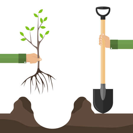 A hand with a shovel plants a tree seedling. The concept of planting a tree. One hand holds a shovel, the other holds a tree seedling. Flat design, vector illustration, vector.
