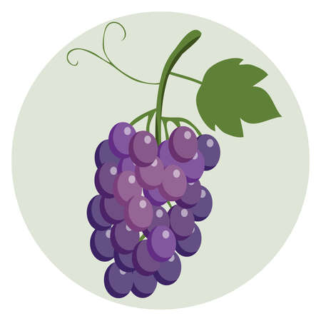 A bunch of blue grapes. Large berries of grapes on bunches. Grapes with a green leaf on a light green background. Flat design, vector illustration, vector.