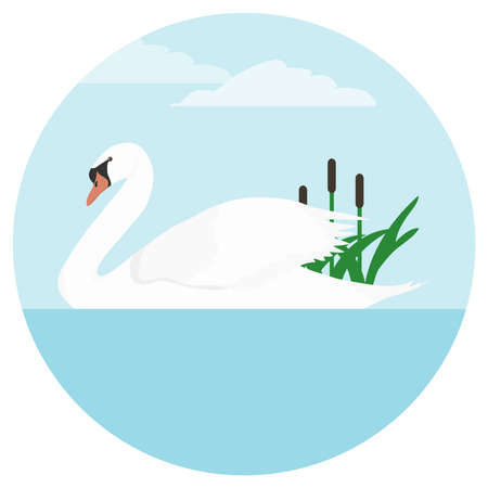 A swan, a white swan floating on the water. Flat design, vector illustration, vector.