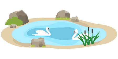 Swans swim on the lake. Two swans swim on the water. Flat design, vector illustration, vector.