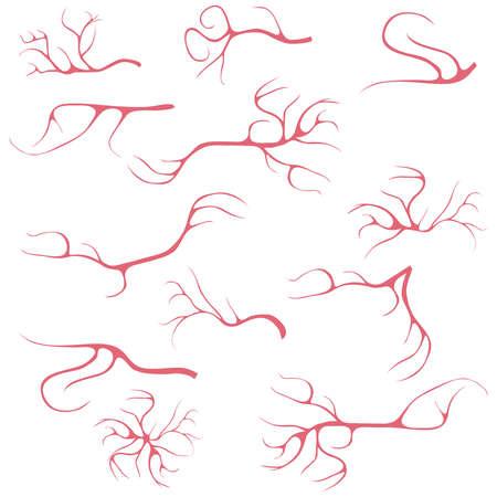 Blood vessels, a set of realistic blood vessels. Capillaries. Flat design, vector illustration, vector.