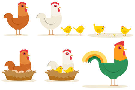 Chicken vector cartoon chick character hen and rooster. Vector set of cute chickens on white background. Chickens made in cartoon style.