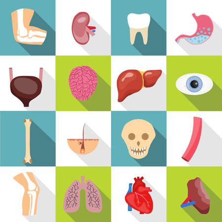Modern flat icons vector set with long shadow effect in stylish colors of human organs. Set of human internal organs including brain, heart, liver, spleen, kidneys, reproductive system, skin isolated. Çizim