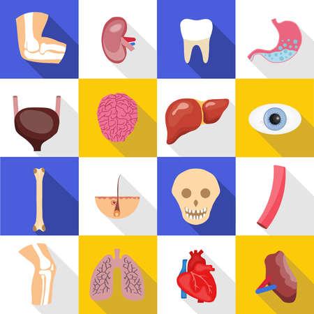 Human organs. A large set of various human organs with shadows. Illustration