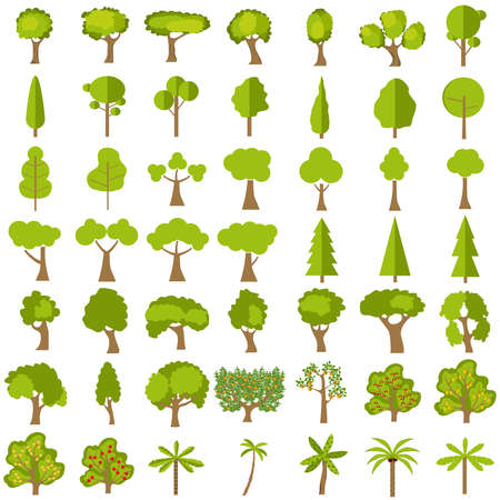 Trees, a large set of realistic green trees. Vector illustration of green tree. Illustration