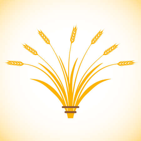 Wheat ears, set of wheat spikelets. Vector illustration. Vector.