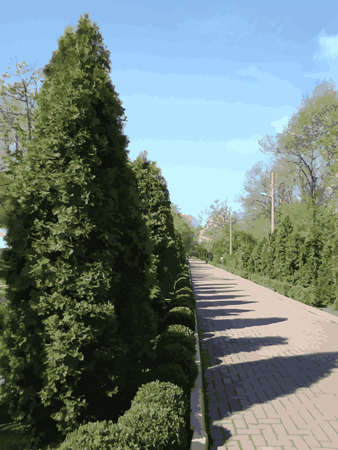 Green alley in a park with cypress trees and a cobbled path. Vector illustration. Vector.