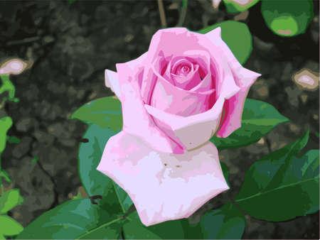 Pink rose on a background of green leaves. Vector illustration. Vector. Illustration
