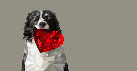 Low Poly Vector Illustration: Dog Holding Red Heart. Black and White Border Collie on Romantic Valentines Greeting Card, Wedding Announcement etc. Place for Your Text. Beige Background. Ilustrace