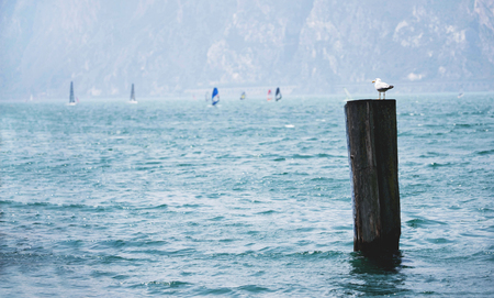 The Seagull sitting in front of windsurfers on great lake. Archivio Fotografico