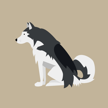 Vector Illustration with Sitting Black and White Dog. Nordic Breed Alaskan Malamute.