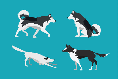 Vector Illustration. Set of Dogs in Flat Design Style. Alaskan Malamute and Border Collie.